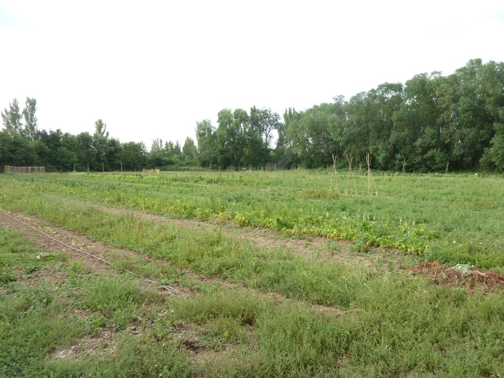 Jardin Lavernose-Lacasse la croisée des jardins