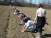 atelier-la-pratique-plantation-des-framboisiers